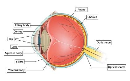 eyediologyopticians.co.uk