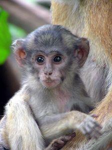 Cuteness courtesy of Wikimedia Commons